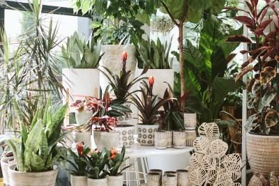 Indoor Plants at Lake Oswego Garden Center