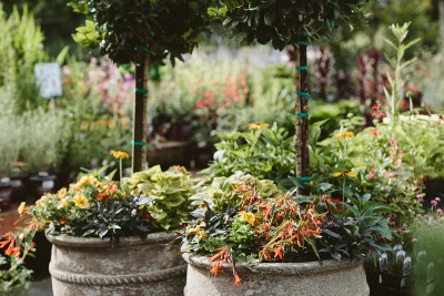 Spring Container Plantings