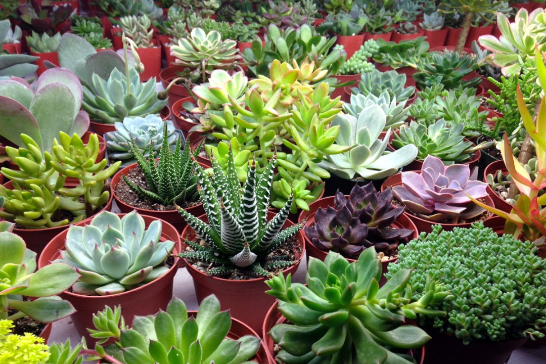 assortment of potted succulents