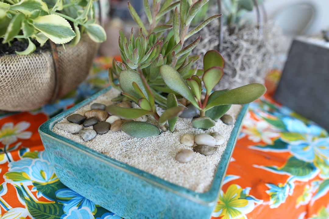 succulent dish planting