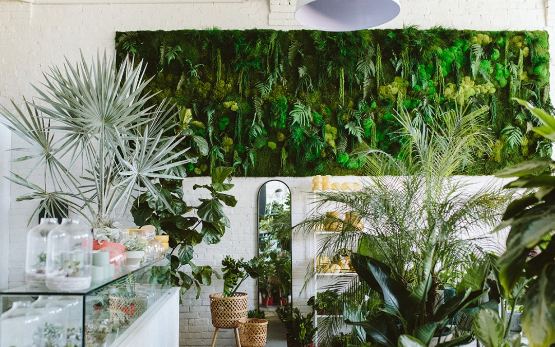 Designing With Plants in the Workplace