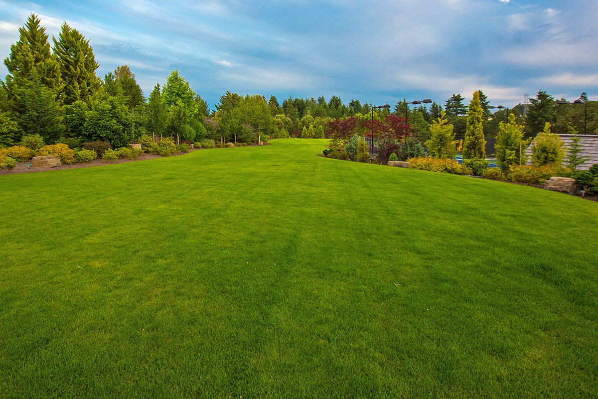 large healthy green lawn