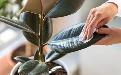 Common Houseplant Pests & Problems