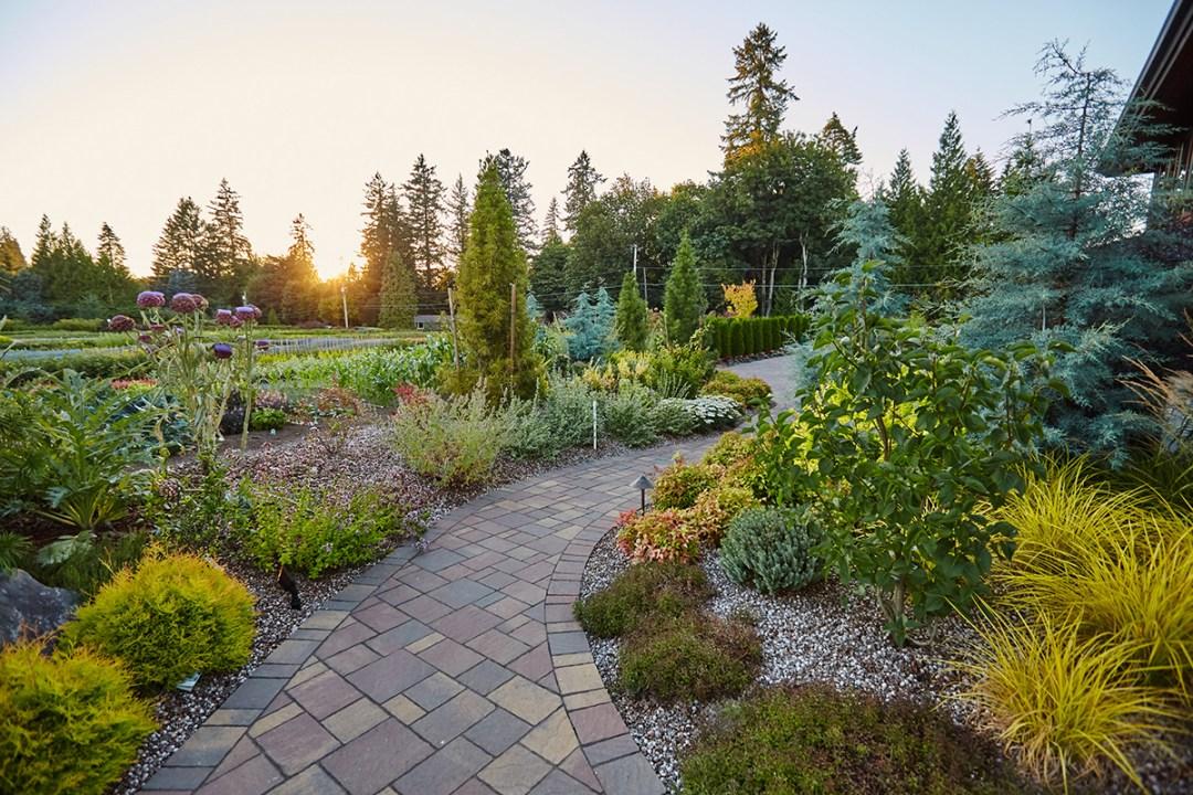 landscape plants along path