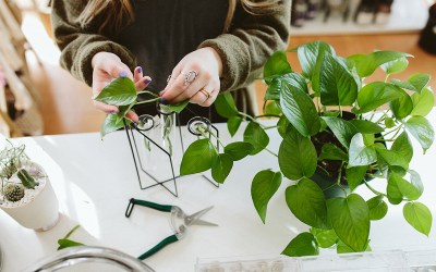 The Science Behind Plant Propagation: The Totipotency of Plant Cells & Different Ways to Propagate