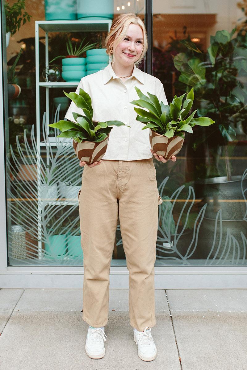 Stagrhorn Ferns
