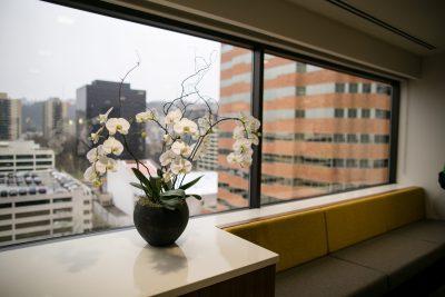 Urban Plantscapes Office Plants