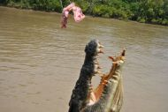 Jumping Crocodiles Darwin