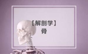 解剖学:骨