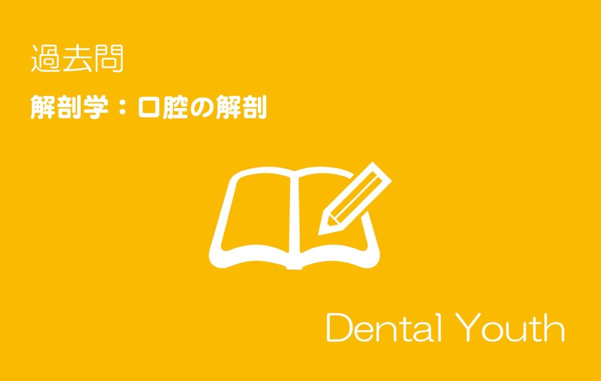 【歯科医師国家試験】解剖学:口腔の解剖(計9問)