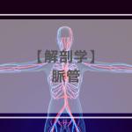 解剖学:脈管