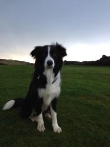 Christmas morning walk - it wasn't raining!