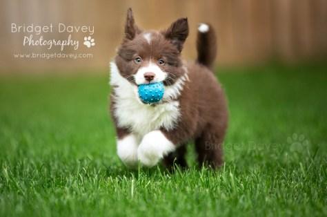 Puppies _ Bridget Davey Photography