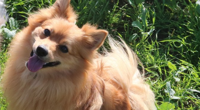 When should you re-home your dog?