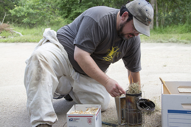 Kavanagh preps the smoker with wood chips prior to tending the hive.