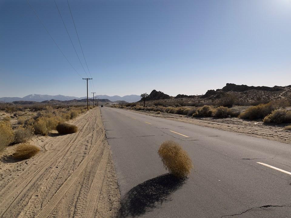 Tumbleweed crossing the road