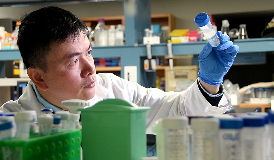 Dr. Hu Zhao in his lab at Texas A&M College of Dentistry
