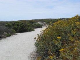 Moss Landing hiking trail