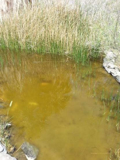 Pupfish Pond