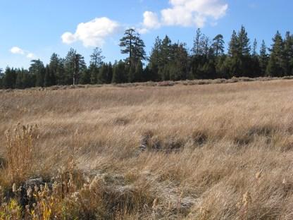 Meadow Along the Lake Shore of Big Bear Lake