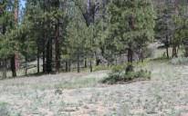 Barton Flats Campsite 38
