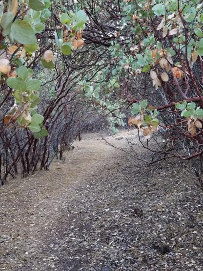 Grinding Rock Hiking Trail