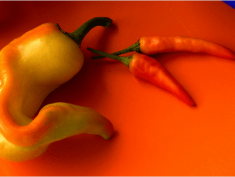 Orange Chile Peppers