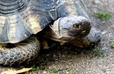 turtle-DSC00304-800