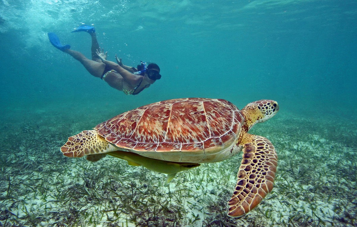 top-tours-cancun-cenotes-and-turtles-main