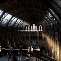 Top 5 muzee de văzut în Londra - 5. Natural History Museum
