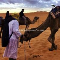 camile desert Maroc