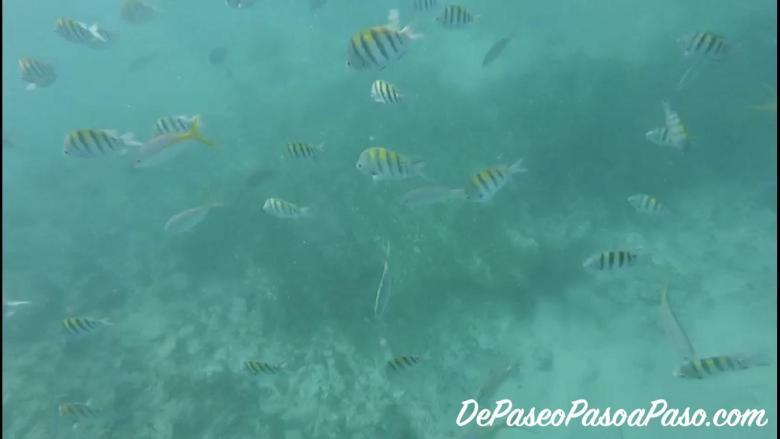 Peces bajo el mar en actividad de snorkel en Punta Cana