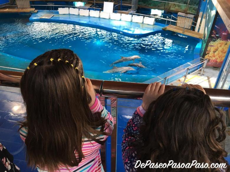 Niñas observando a los delfines en el Zoo
