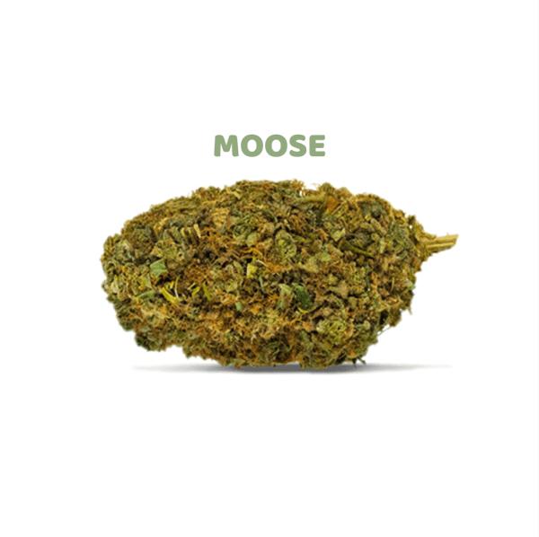 comprar cogollos marihuana online Moose