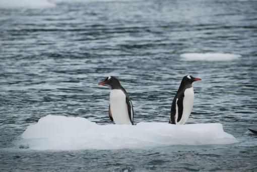 imagen pinguinos