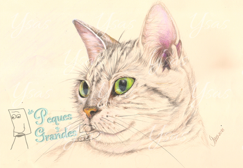 gato a lápiz de color terminado