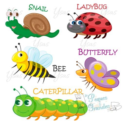 colección de insectos de primavera