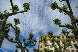 Arboles en la Plaza Ensanche (Irun)