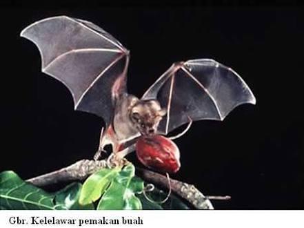 Kelelawar buah di India Selatan dianggap sebagai penyebab berkembannya virus aneh yang bisa merusak jaringan otak sehingga menimbulkan kematian.
