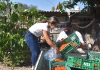 DIF Municipal Colima realiza entrega de jitomate cherry a familias vulnerables