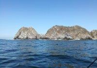 Detectan marea roja no tóxica en bahía de Manzanillo