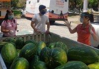 3 mil 540 personas se benefician con donación de sandía: Azucena López Legorreta