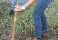 Gobierno del Estado presenta programa de Reforestación 2020 para Colima