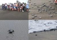 Participan funcionarios de la comuna tecomense en liberación de tortugas en tecuanillo y reciben charla de concientización