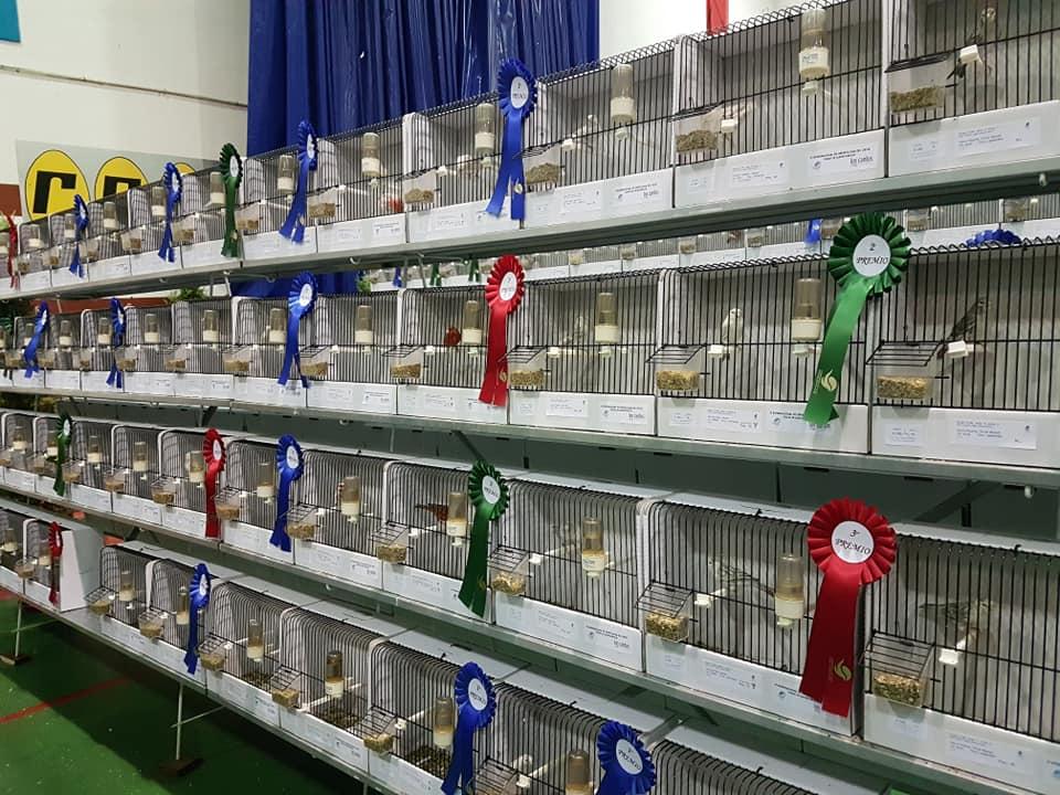 Resumen del IV Internacional de Ornitología del Oeste Alburquerque (1)