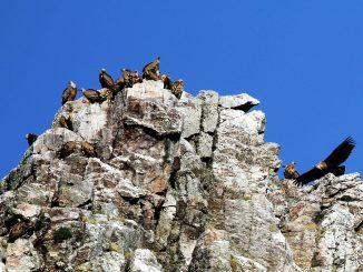 La mayoría de los ayuntamientos de Monfragüe apoyan el cambio de la Ley de Parques Nacionales para permitir la caza sostenible