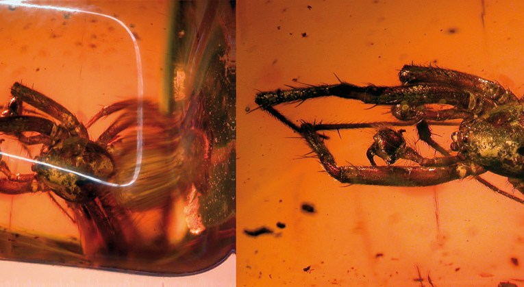 Fossils in amber (Part 2): Preparation and study