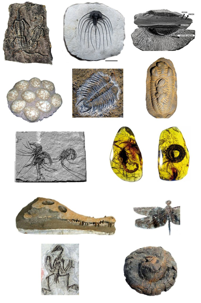 Fossil fakes and their recognition – Deposits Magazine