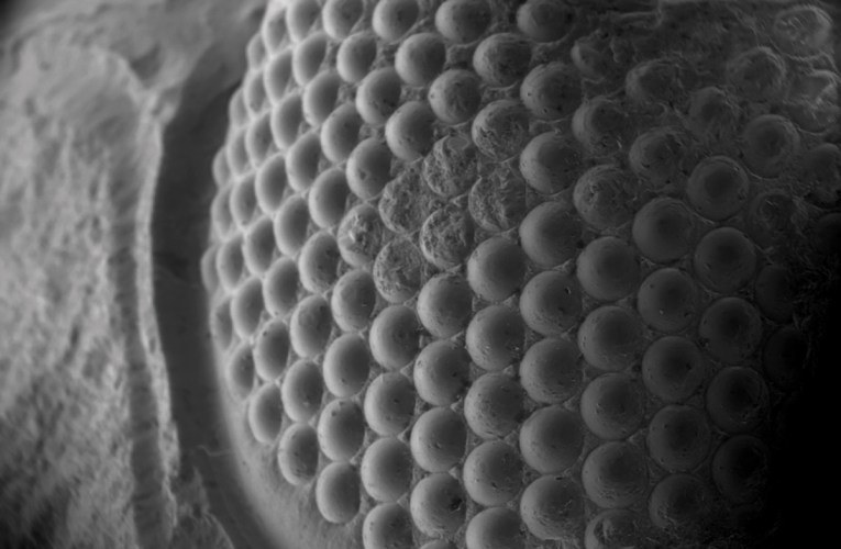 Looking through a crystal ball: Unravelling the wonders of trilobite eyes