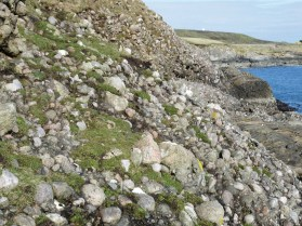 Devonian Alluvial Fan Conglomerate Lerwick